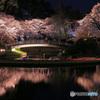 夜桜 (264T)
