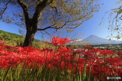 富士の見える丘で
