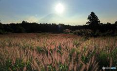 光る草原 (479T)
