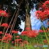 大杉と背比べ (291T)