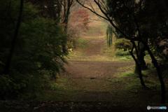 晩秋の参道