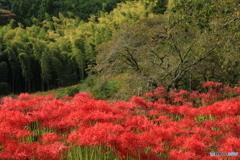 初秋の竹林