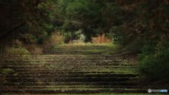 山寺の参道