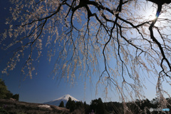 富士と滝桜