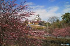 春の掛川城