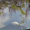 藤に富士 (442T)