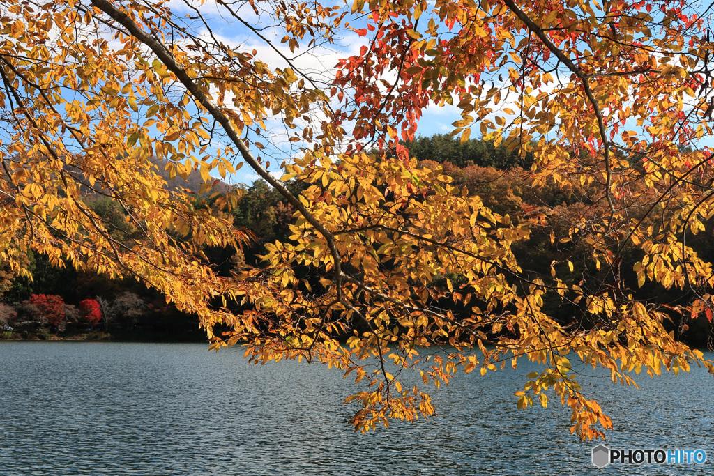 色付く湖畔