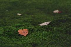 Small autumn