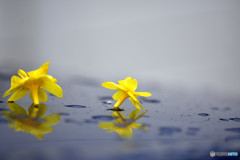 春の花を乗せて・・・