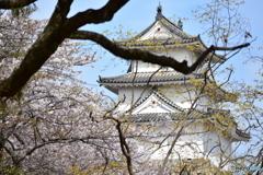 明石城の桜たち