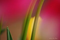 魅惑の茎ライン
