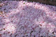 ピンクの地面