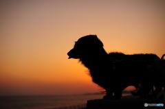 こむぎと夕陽
