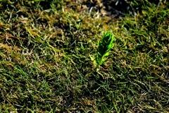 緑の中で咲く