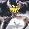 花の影の恋
