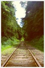 森のトンネルへ・・小湊鉄道 夏も終わりへ