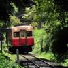 森の中を走る小湊鉄道キハ200・・・