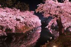 弘前城公園お堀の夜桜・・