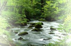 短い夏の奥入瀬渓流 三乱の流れ