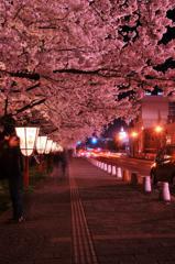 弘前公園の夜桜は。。トンネル風