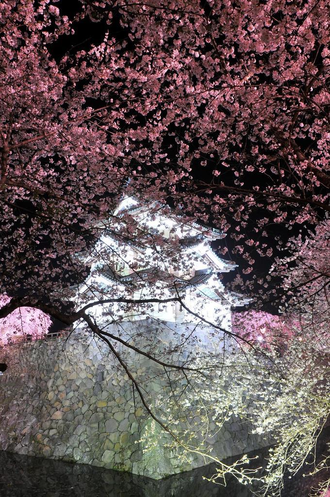 白く光る弘前城と夜桜・・