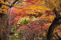 竜田川の紅葉 4