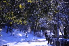 散る雪 2