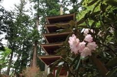 室生寺-五重塔とシャクナゲ