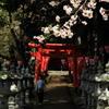 桜・神社 2
