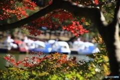 池のボートと紅葉