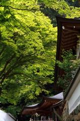 長谷寺-新緑