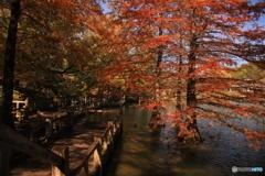 池の中の紅葉2
