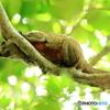 木の上で・・・