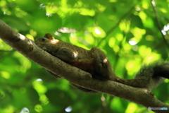 木の上で・・・2