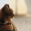 野良猫 2
