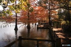 池の中の紅葉1