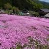 國田家の芝桜 - 12