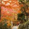 日枝神社 - 4