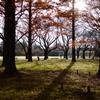 富山県中央植物園より18