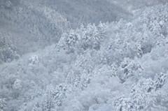 突然の大雪 5