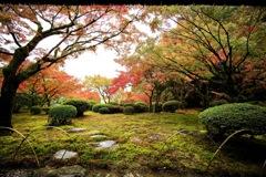 美しい苔庭