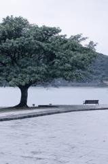 樹のある風景 三角西港