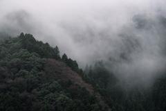 霧湧き上がる
