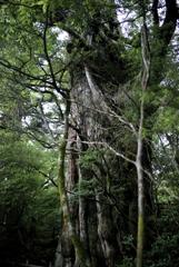 推定樹齢3,000年