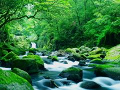 五月の菊池渓谷 新緑バージョン