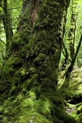 木漏れ日の森