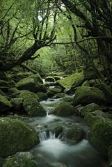 白谷雲水峡 渓流
