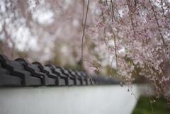 和の風景~春~