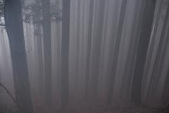 美しき霧の世界
