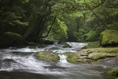 広河原の流れ